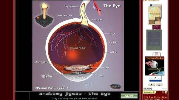 Anatomy Arcade Radial Nerve Anatomy Illustrations Image