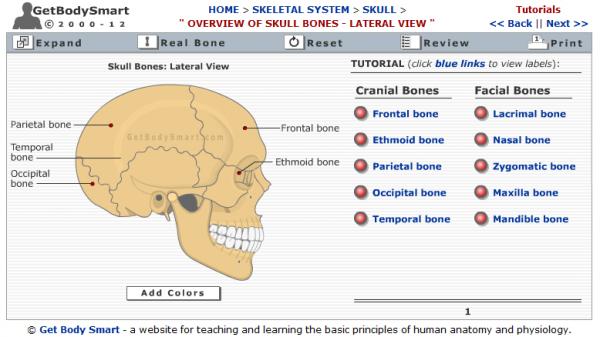 Aprende Anatomía y Fisiología Online. Inteligencia Colect.