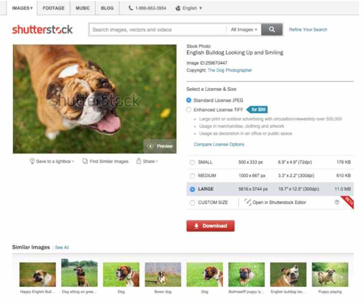 Imagen: ejemplo de Shutterstock
