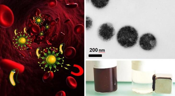 Bacterias con anticuerpos sintéticos atraídas con imanes. Imagen: Empa