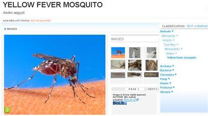 mosquito1.jpg