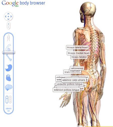 Google Body Browser – Para estudiar anatomía del cuerpo humano