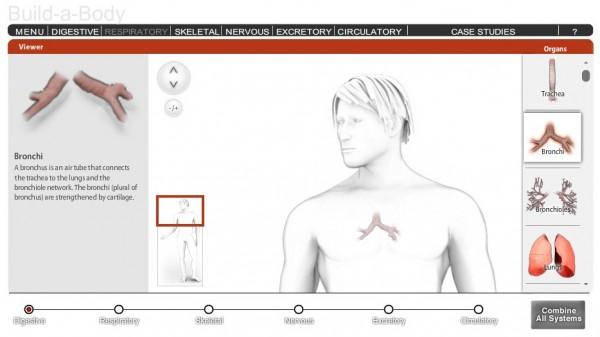 7 recursos online para aprender Anatomía y Fisiología