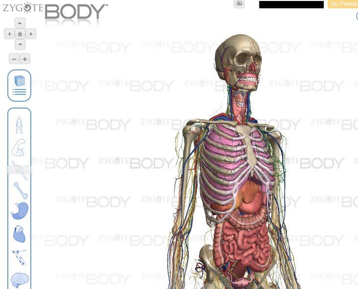 ZygoteBody, para ver el cuerpo humano en 3D