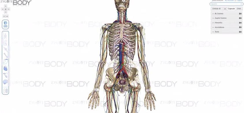 Recursos para navegar por el cuerpo humano en 3D