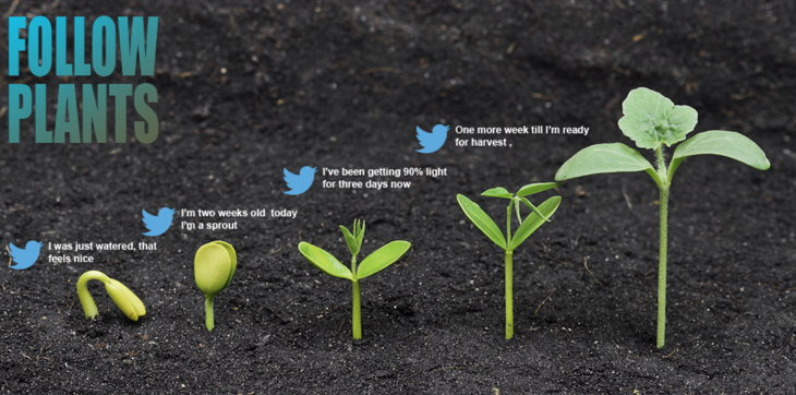 followplants plantas twitter