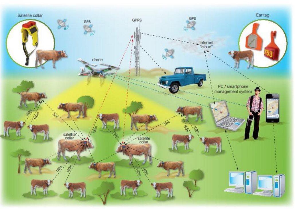 La ganadería se apunta al Internet de las Cosas