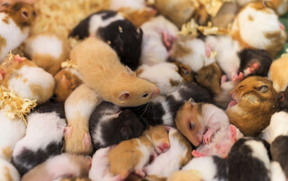 Ratonas estériles dan a luz con ovario hecho con impresora 3D