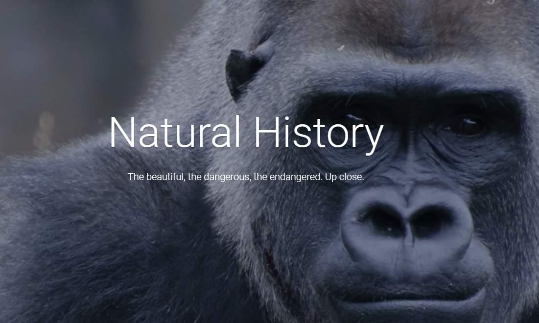 Google se asocia con museos de historia natural para mostrar nueva exposición en Internet