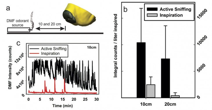 Staymates, M. E. et al. Biomimetic Sniffing Improves the Detection Performance of a 3D Printed Nose of a Dog and a Commercial Trace Vapor Detector.
