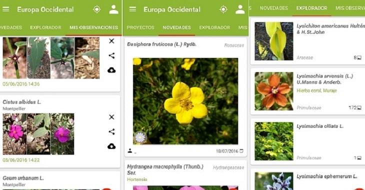 2 apps en iOS y Android para identificar cientos de plantas