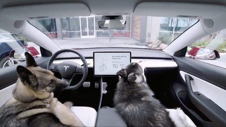 Tesla lanza las nuevas características 'Modo centinela' y 'Modo perro'