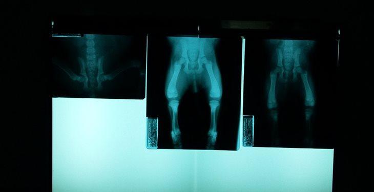 radiografía de un animal