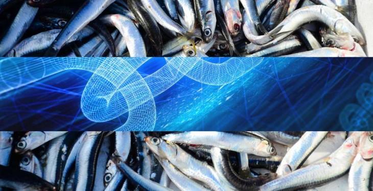 Blockchain peces