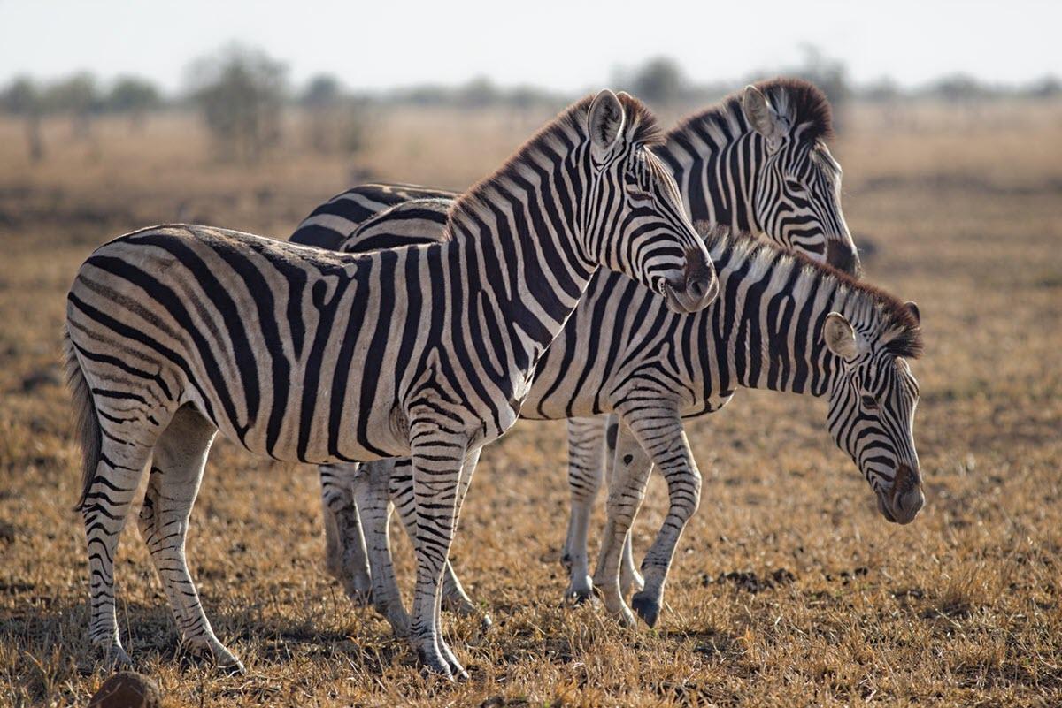La IA de DeepMind analiza el comportamiento de los animales a partir de imágenes