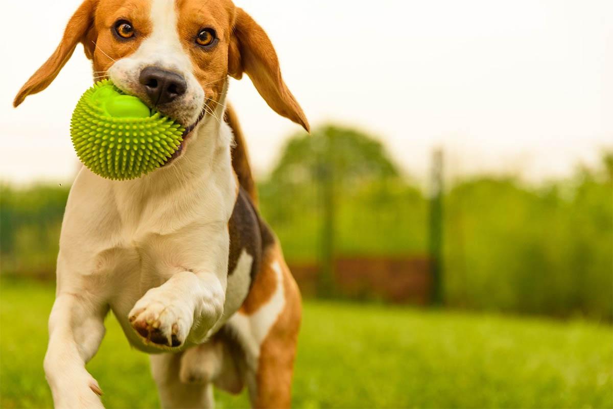 5 apps en español que debe tener todo dueño de mascotas