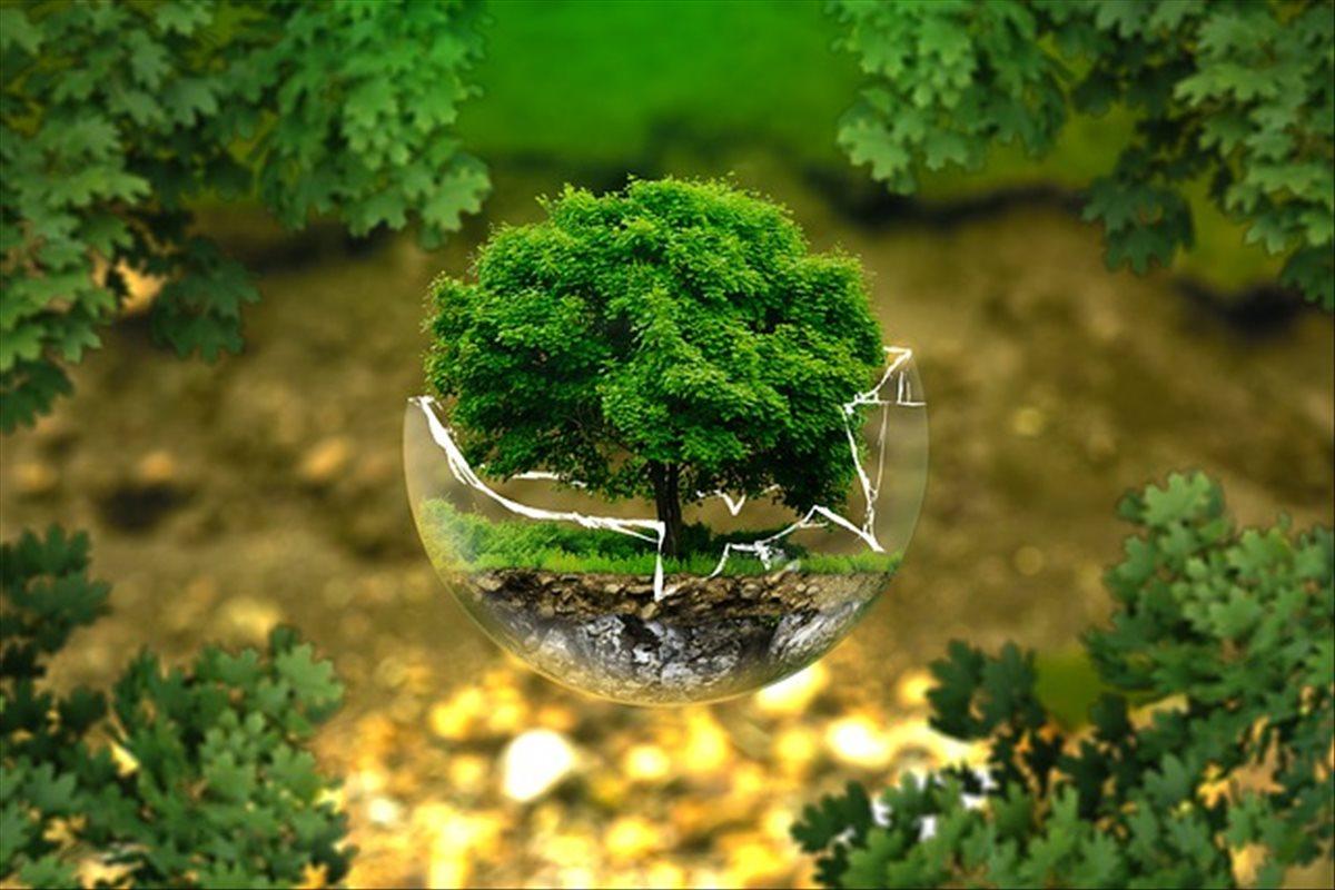 Los esfuerzos de Amazon para reducir su huella medioambiental