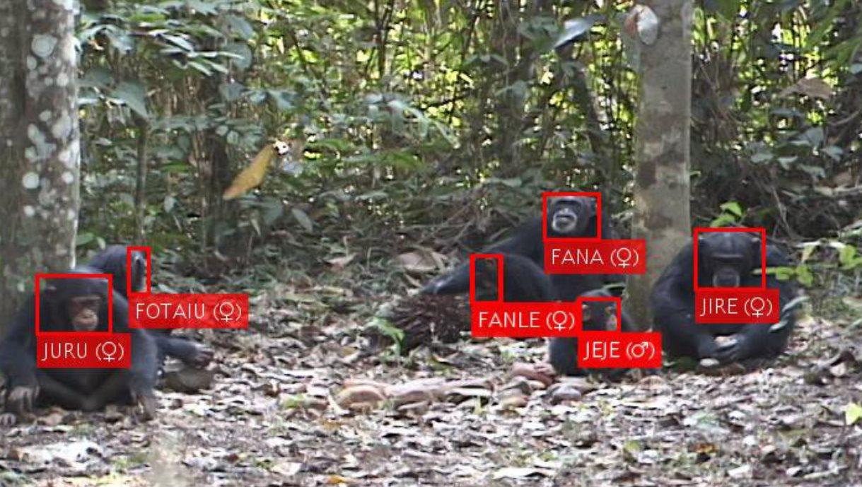 reconocimiento facial primates