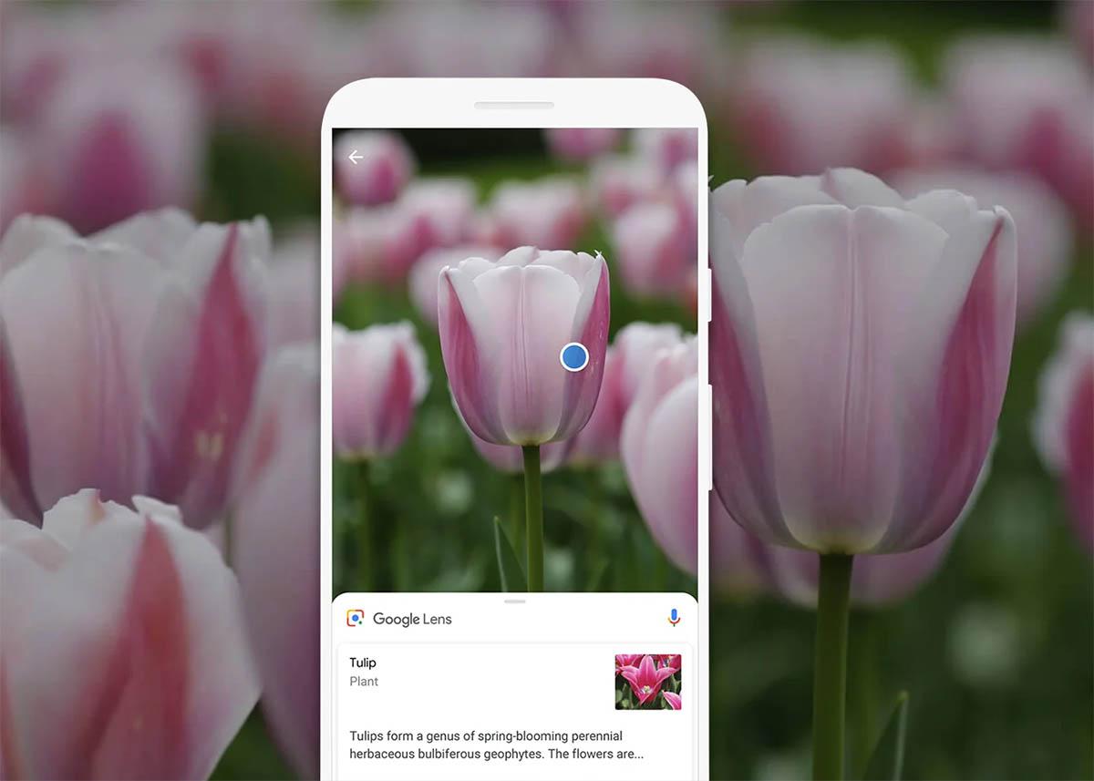 Google Lens para detectar plantas