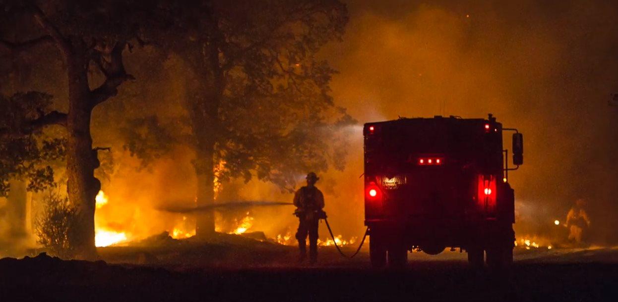 Un gel para que los árboles sean resistentes a los incendios
