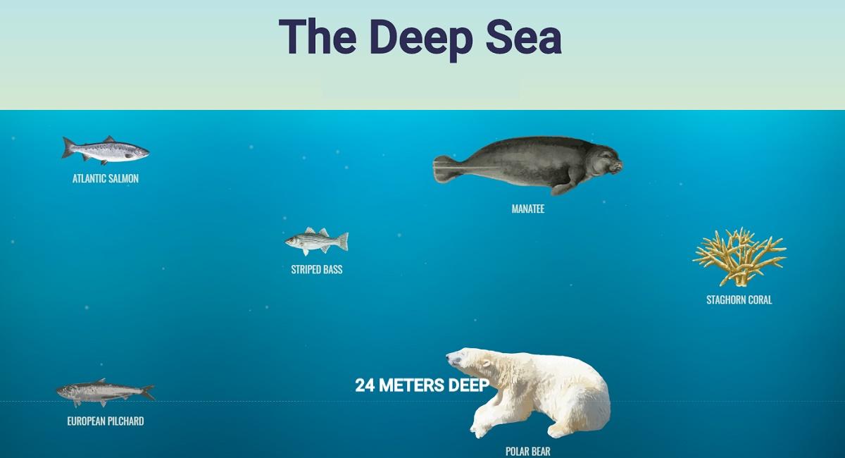 ¿Cuál es la profundidad del océano? Esta web te puede ayudar a entenderlo