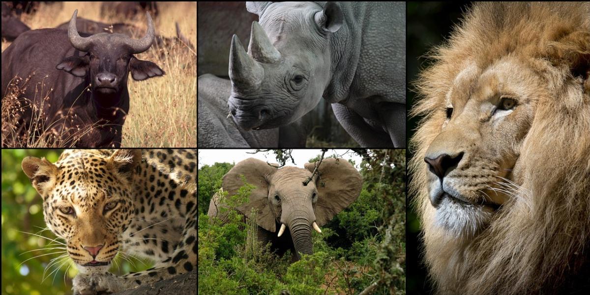 Biodiversity Heritage Library: Colección sobre biodiversidad del planeta con miles de imágenes de dominio público