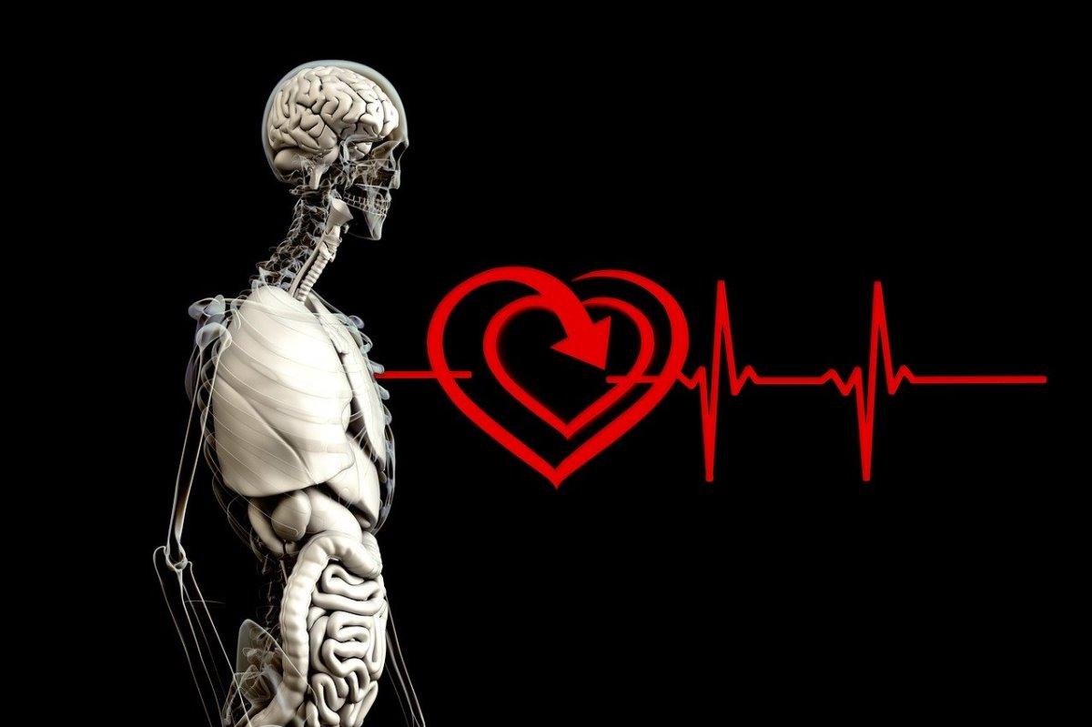 Médicos japoneses implantaron en un paciente músculo cardíaco creado en laboratorio
