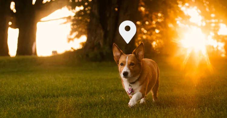 5 alternativas para localizar a tu mascota mediante GPS