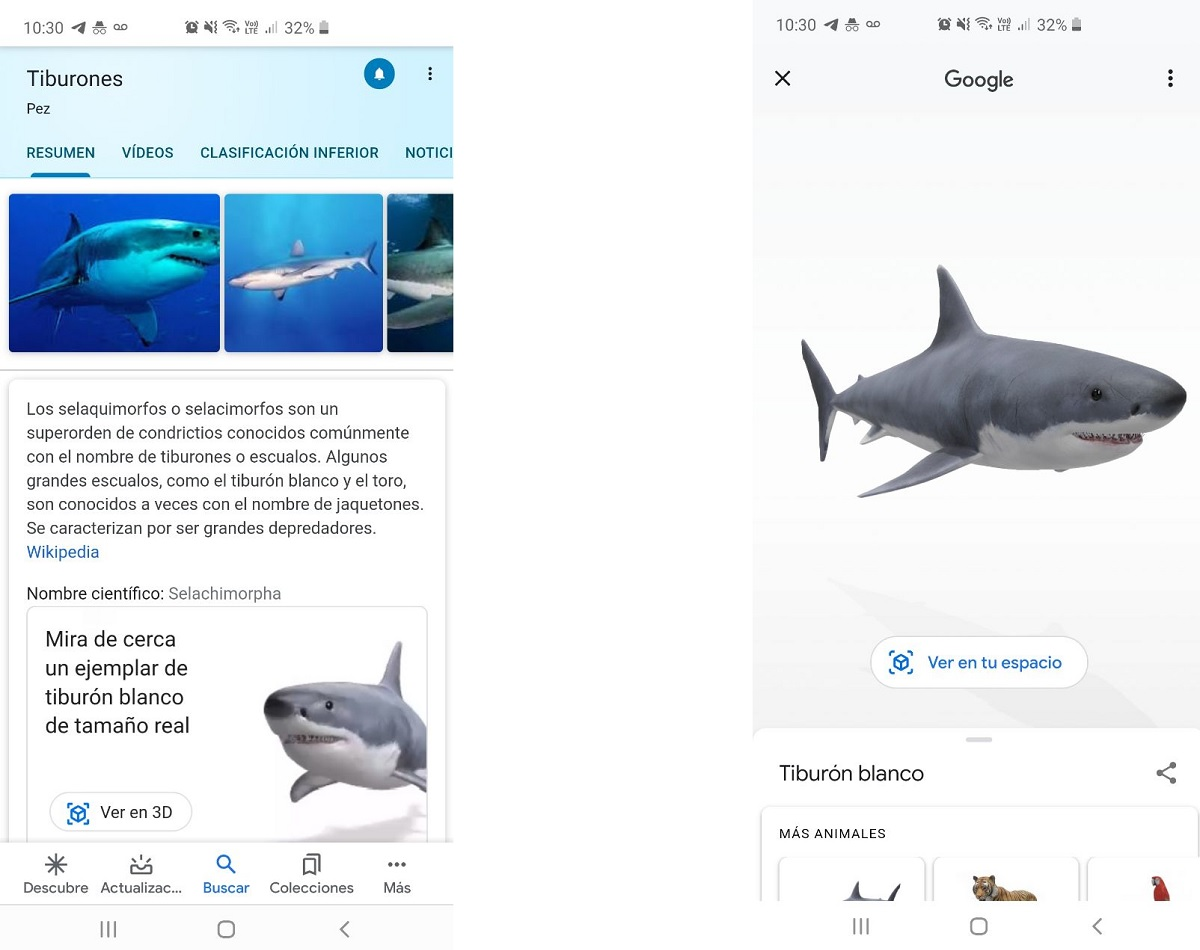 Tiburón en 3D