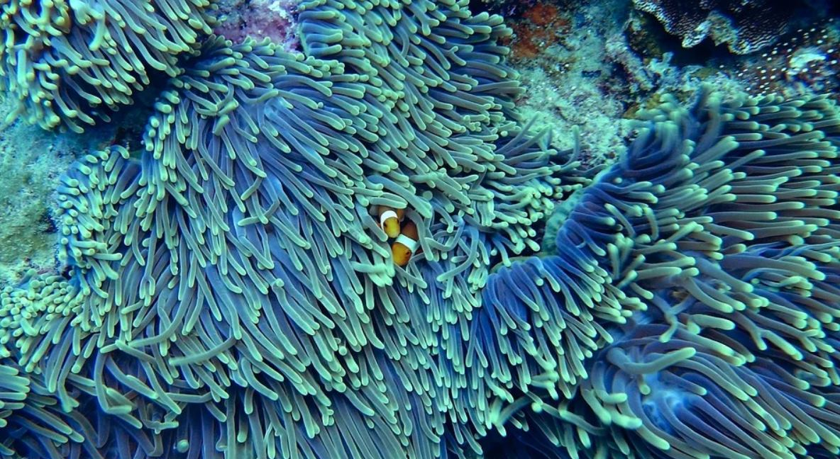 Impresoras 3D para restaurar arrecifes de corales