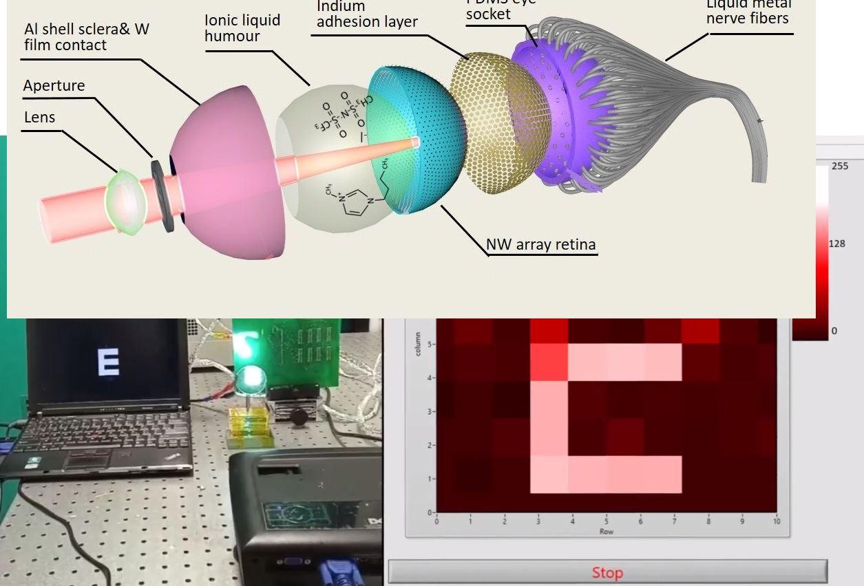 Un ojo artificial que podría dar visión nocturna y otras mejoras