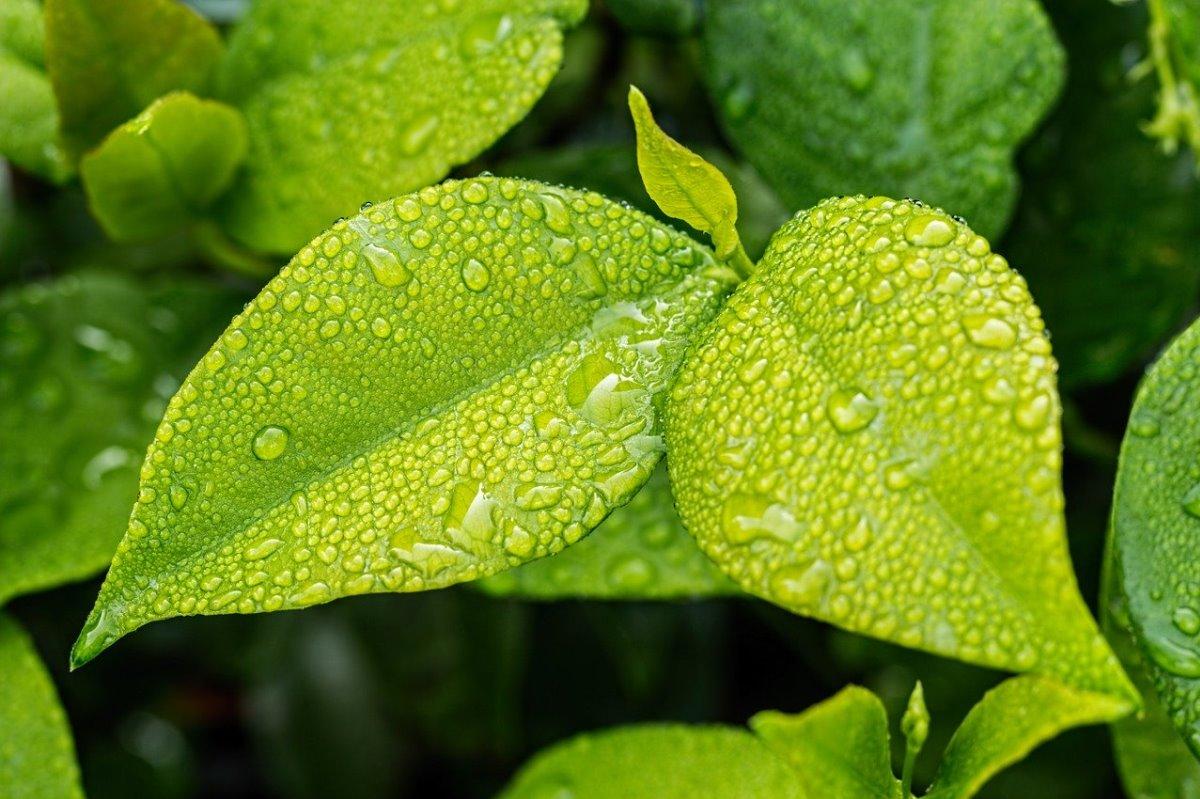 Crean árboles sintéticos con capacidad para retener mayor cantidad de agua