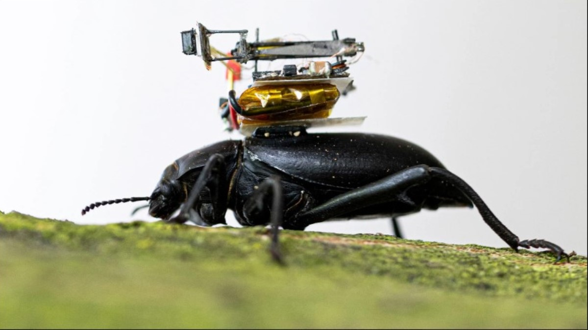 camara de accionn miniatura sobre insecto