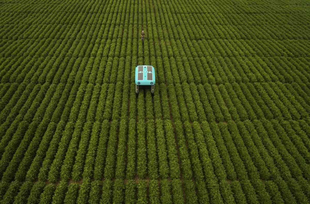 Madre de Google crea proyecto para mejorar la agricultura