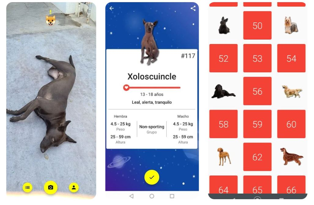 Una app que reconoce razas de perros y las colecciona