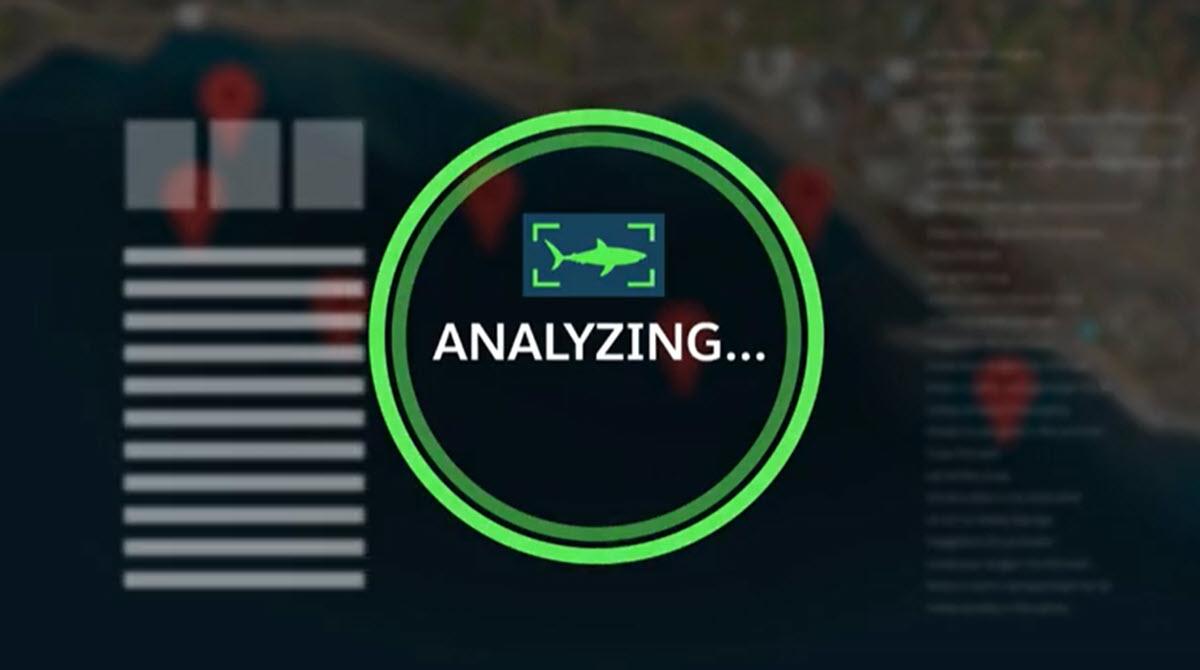 Usan IA y drones para detectar tiburones en tiempo real