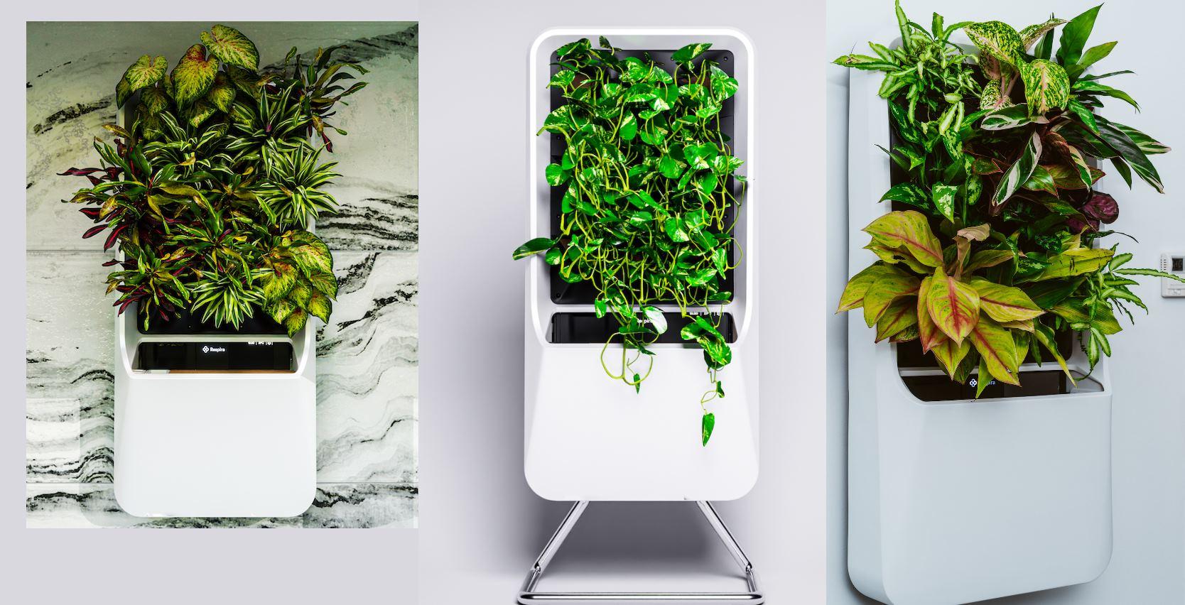 plantas sin tierra