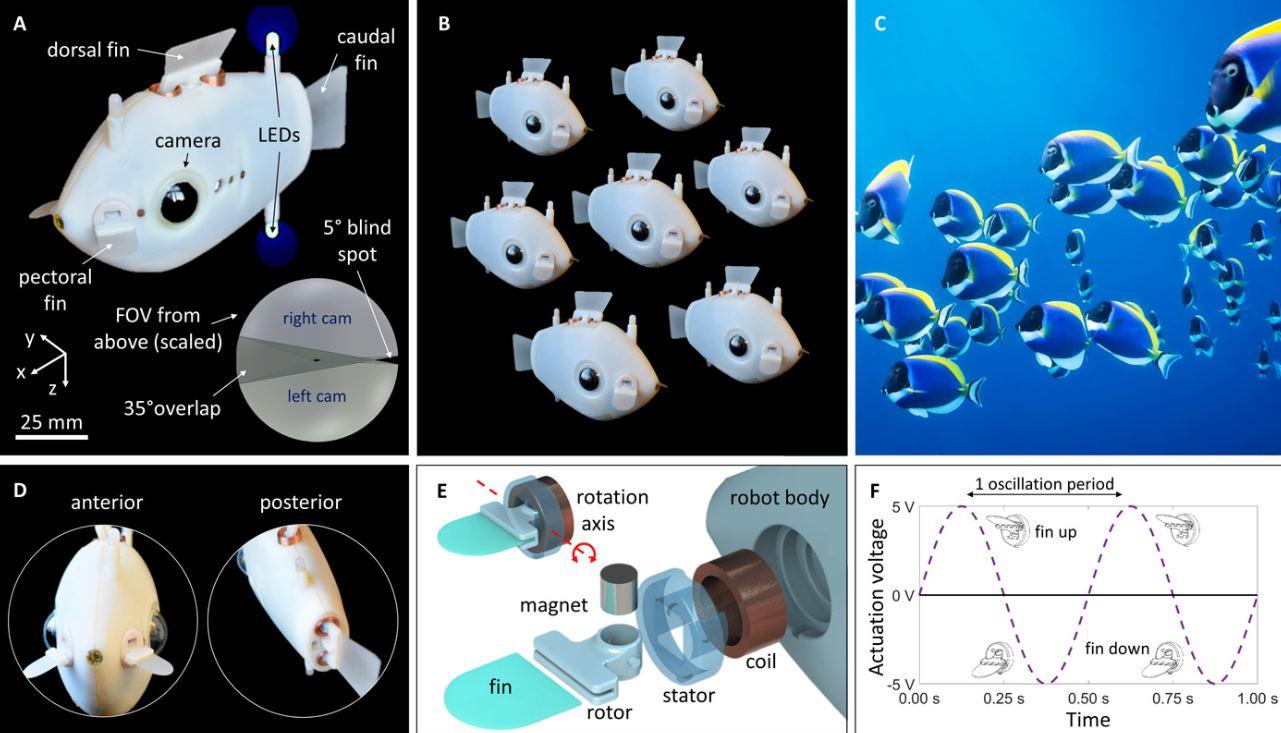 Bluebot, robots submarinos que nadan como bancos de peces