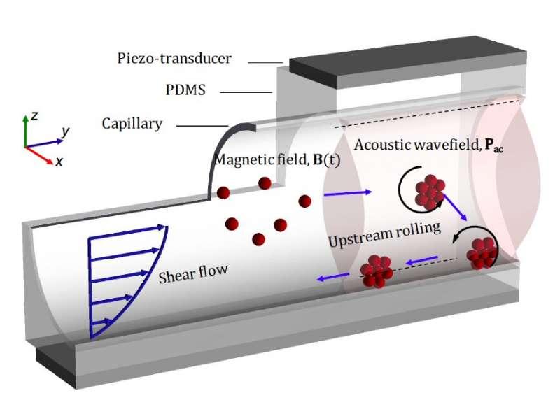 nanorobots en el interior del cuerpo humano