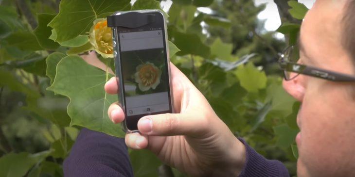 Identificar plantas desde smartphone Android apps