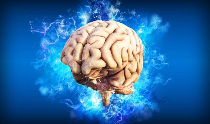 Científicos cultivan minicerebros que replican la actividad neural compleja